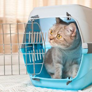 Consulenza per abituare il gatto al trasportino, al viaggio in auto e alla visita veterinaria