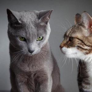 Consulenza per l'introduzione di un nuovo gatto in casa dove è già presente uno o più gatti