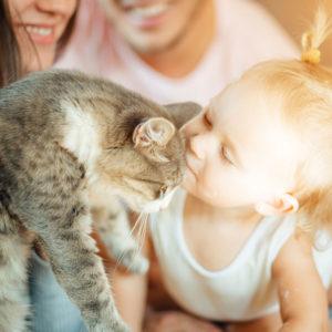 Consulenza per preparare il gatto all'arrivo di un neonato