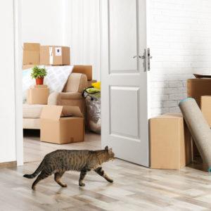 Consulenza per il trasloco in una nuova casa