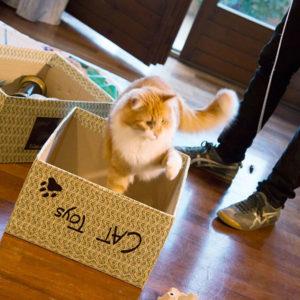 Consulenza per educare il gattino a giocare nel modo corretto